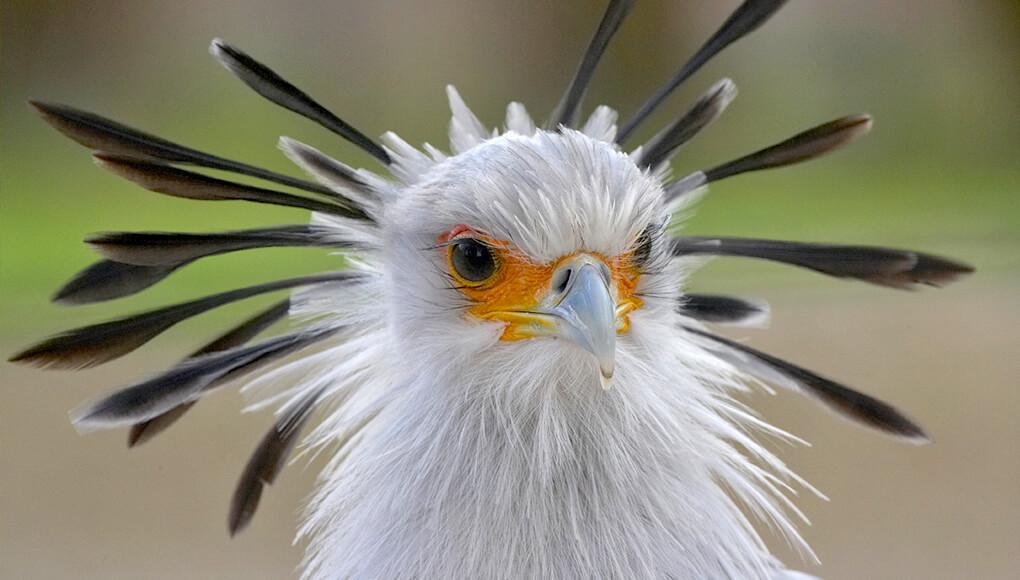 Big, beautiful birds   San Diego Zoo Kids
