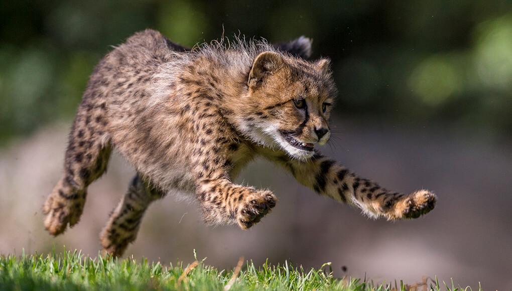 Speedy Spots San Diego Zoo Kids