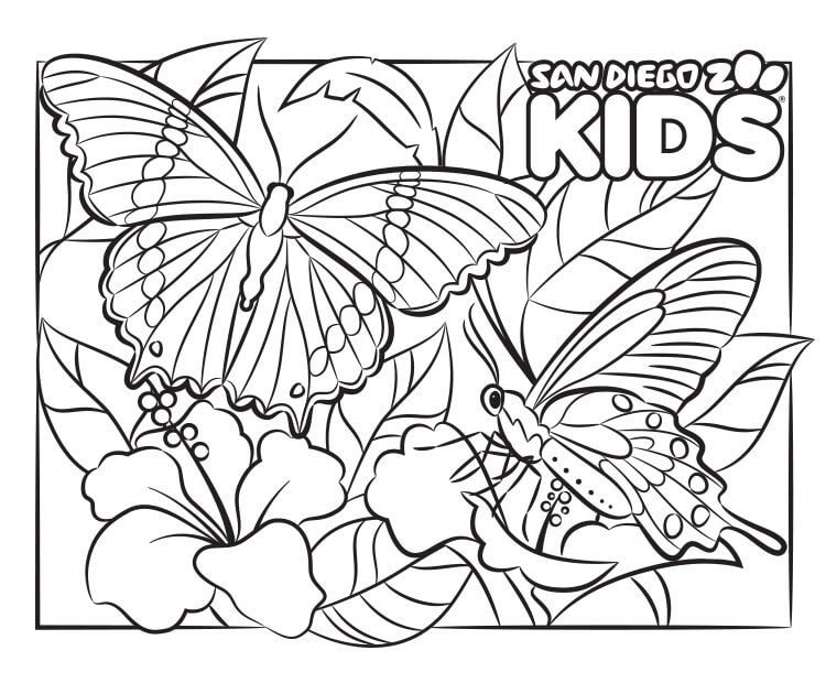Butterfly coloring page.