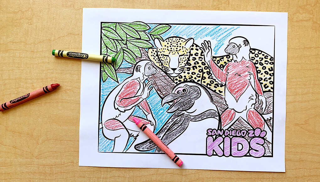 Sifaka lemurs, leopard, and African penguin coloring page.