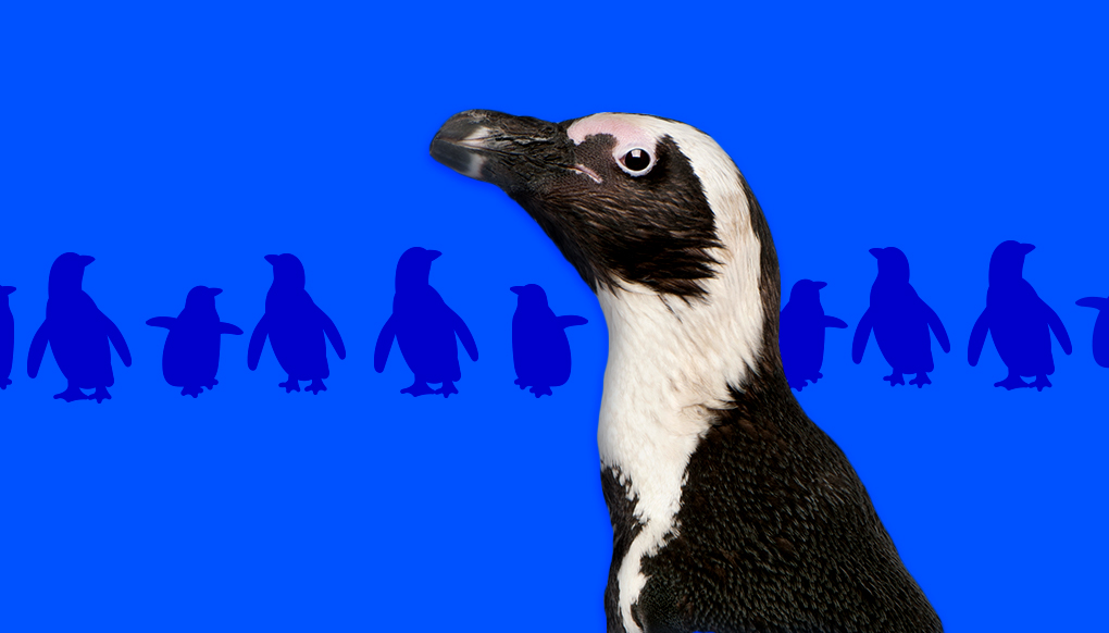 African penguin infant of a row of blue penguin silhouettes.