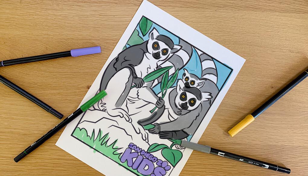 Coloring Page Lemurs San Diego Zoo Kids