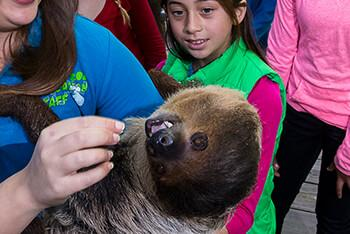 A group of children watch a teacher feed a sloth