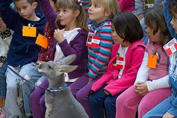A group of children watching a small kangaroo