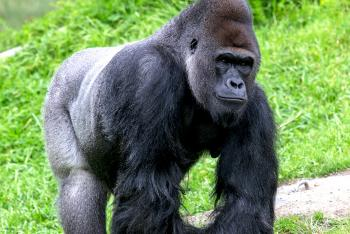 Animals | San Diego Zoo Kids